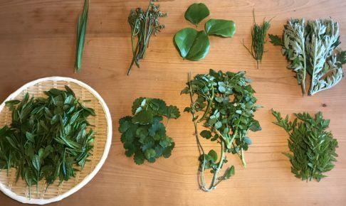 近所の山で山菜採り